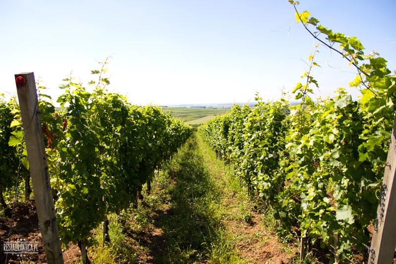Arvay winnica, Ratka, Węgry
