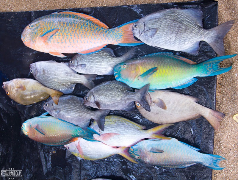 Targ Rybny kolorowe ryby