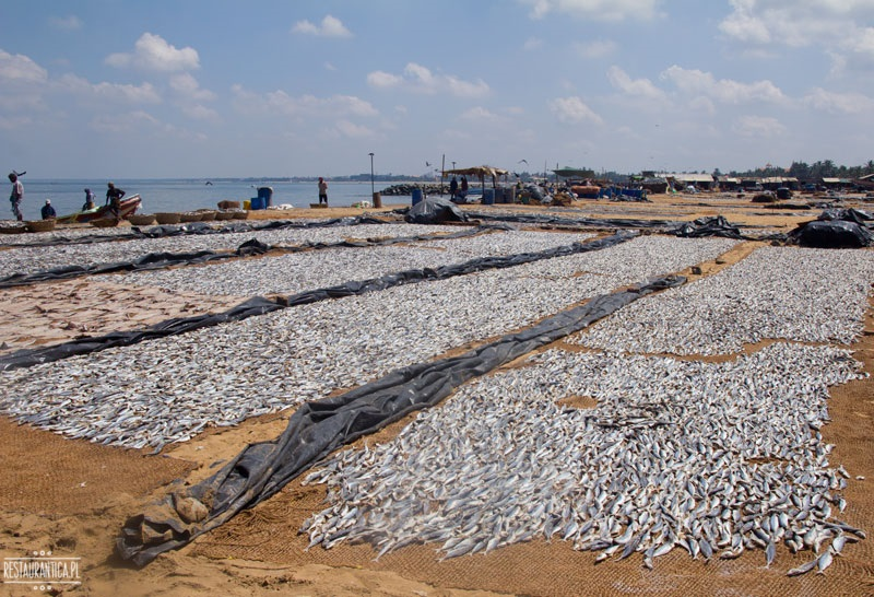 Targ Rybny Negombo Sri Lanka