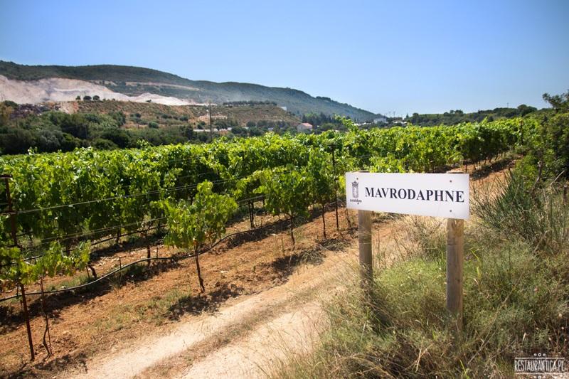 Gentilini winnica